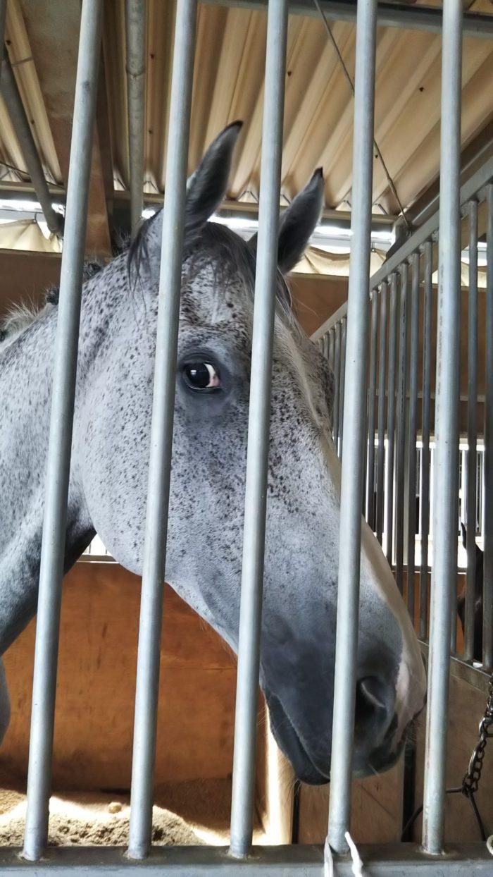 馬も熱中症??